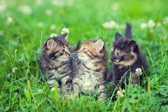 котята немногая 3 Стоковые Изображения