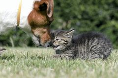 котята немногая Стоковые Фотографии RF