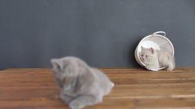 Котята отдыхая на деревянном поле видеоматериал