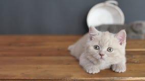 Котята отдыхая на деревянном поле сток-видео