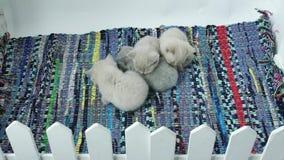 Котята спать на покрашенном обнажанном ковре видеоматериал