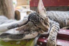 Котята спать сладостно Стоковое Изображение