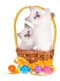 Котята с пасхальными яйцами на белой предпосылке стоковое изображение
