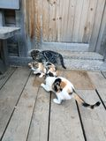 котята шаловливые Стоковое фото RF