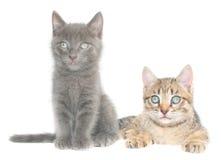 котята Стоковое фото RF