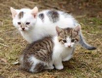 котята Стоковые Изображения