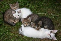 котята стоковое изображение rf