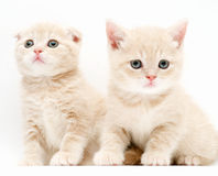 котята Стоковые Фото