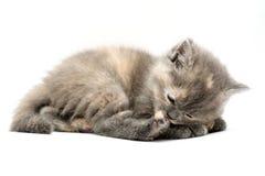 Котята Стоковое Фото