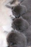 котята 3 Стоковые Изображения RF