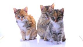Котята видеоматериал