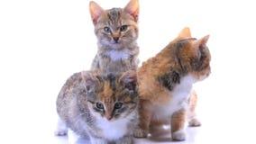 Котята сток-видео