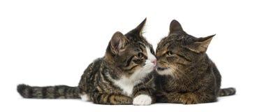 котята 2 Стоковые Изображения