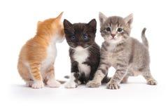 котята 3 Стоковые Фото