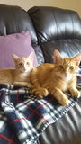 Котята стоковая фотография rf
