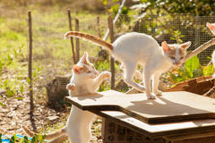 котята 2 Стоковые Фотографии RF