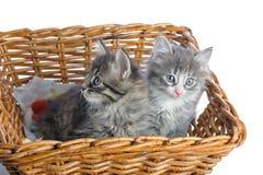 Котята Стоковое Изображение