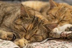 котята 2 Стоковое Изображение