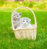 2 котят в корзине на зеленой траве Стоковая Фотография