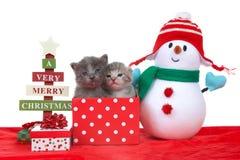 2 котят в подарке на рождество с снеговиком стоковые изображения