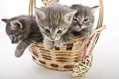 3 котят, который побежали от корзины Стоковое фото RF