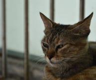 3 котят на нашем кампусе, университете южного Китая нормальном стоковая фотография