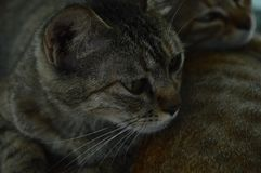 3 котят на нашем кампусе, университете южного Китая нормальном стоковые изображения