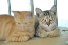 3 котят на нашем кампусе, университете южного Китая нормальном стоковое фото