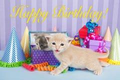 2 котят одних месяца старых в куче коробок дня рождения Стоковая Фотография RF