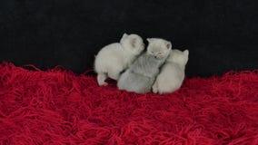 4 котят сидя совместно на ковре акции видеоматериалы