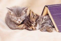 2 котят спят хорошо, покрытый с книгой Пролом в teachi стоковая фотография