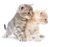 2 котят Стоковые Изображения RF