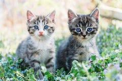 2 котят Стоковое Изображение