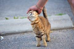 Кот  Ð omeless striped на улице Стоковые Фото