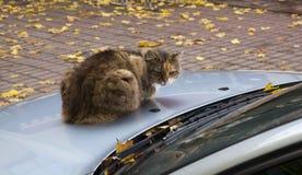 Кот автомобилем Стоковое Изображение