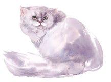 Кот, акварель, эскиз, краска, животные, иллюстрация Стоковое фото RF