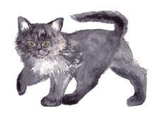 Кот, акварель, эскиз, краска, животные, иллюстрация Стоковое Изображение RF