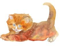 Кот, акварель, эскиз, краска, животные, иллюстрация Стоковая Фотография RF
