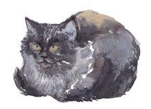 Кот, акварель, эскиз, краска, животные, иллюстрация Стоковые Фотографии RF