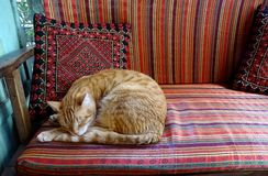 Кот апельсина и белых striped расслабляющий на софе сделанной по образцу красным цветом Стоковая Фотография RF
