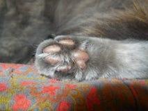 Кот лапки Стоковое Изображение