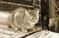 Кот дальше подпирает старого грузового пикапа Стоковая Фотография
