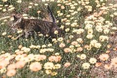 Кот бежать в цветках Стоковое Изображение RF