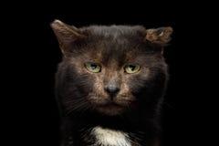 Кот безмятежности коричневый на черной предпосылке стоковые фотографии rf