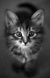 кот безыменный Стоковая Фотография RF
