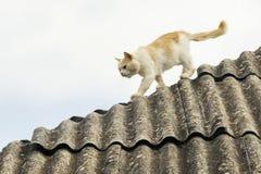 Кот белого имбиря серьезный на крыше Стоковая Фотография
