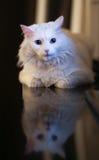 Кот белизны nighttime Стоковые Фото