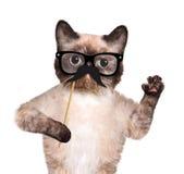 Кот битника Стоковая Фотография RF