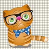 Кот битника Стоковое Фото