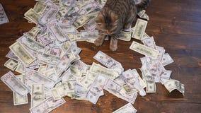 Кот богачей акции видеоматериалы